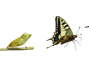 Catapillar to Butterfly
